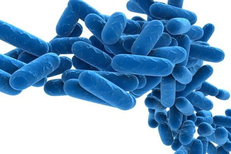 anti-Legionella measures